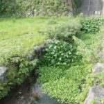 島原城 お堀