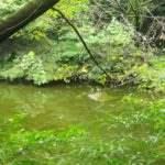 島原遊歩道 休憩所の池
