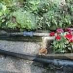 しまばら芝桜公園 権現様の水