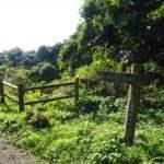垂木台地森林公園 見晴らしのいい散策道