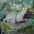 舞岳湧水 カメ