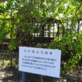 旧大野木場小学校 ジャングルジム