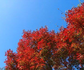 まゆやまロード 平成新山展望園地 紅葉