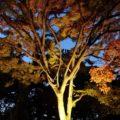 霊丘公園 紅葉