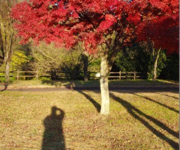 ひょたん池公園 紅葉と2ショット
