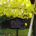 武家屋敷 篠塚邸 桑の木