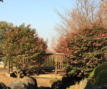 百花台公園 木の橋