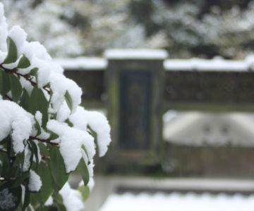 焼山神社 雪と鳥居