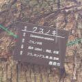 ひょうたん池公園 クスノキ