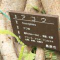 ひょうたん池公園 アコウ