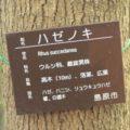 ひょうたん池公園 ハゼノキ