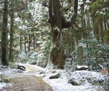 岩戸神社 皇太子御成婚記念植樹の碑