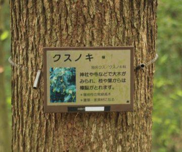 眉山の森遊歩 クスノキ道