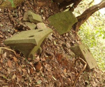 保存樹 山の神サクラ 石祠