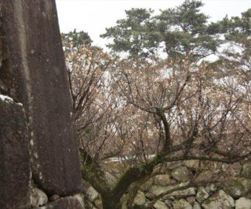 島原城 鏡石と梅