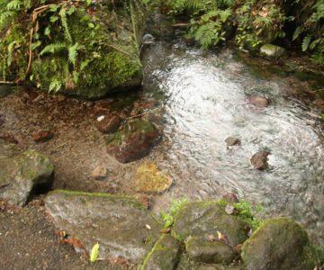 岩戸水神 ハート形の石