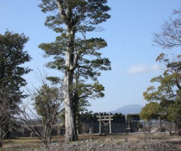 中安徳町 八幡神社