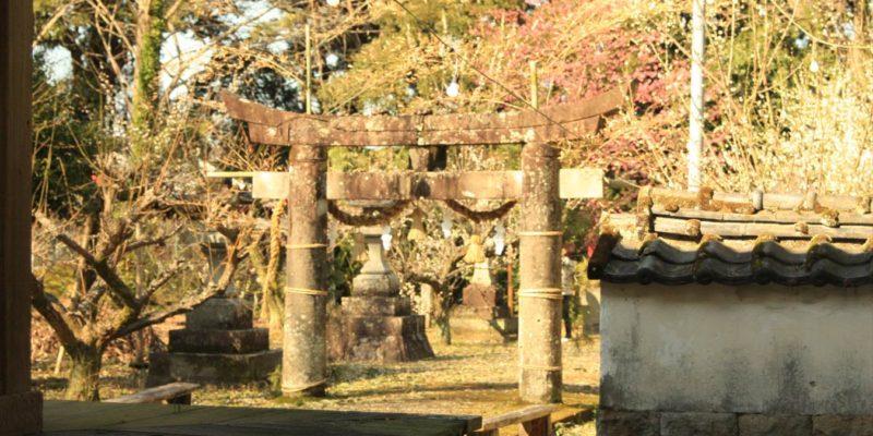 神代神社 拝殿 鳥居