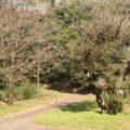 ひょうたん池公園 アコウの木