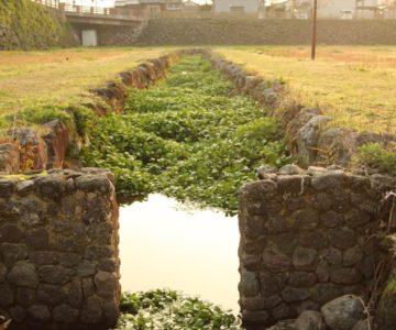 島原城 お堀 菖蒲園
