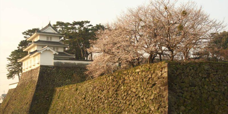 島原城 お堀 桜