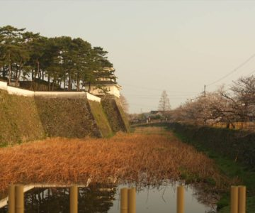 島原城 桜