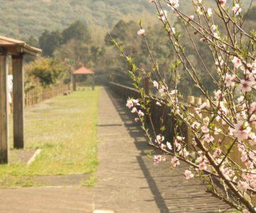 しまばら火張山花公園