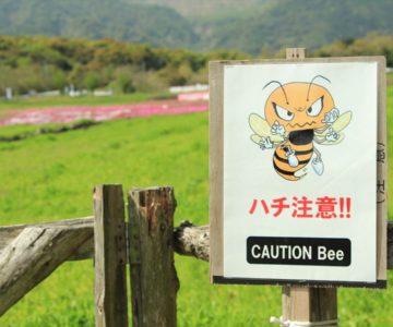 しまばら火張山花公園 芝桜