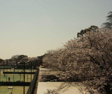 島原総合運動公園 テニスコート