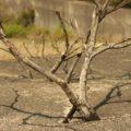 砂防ダムから生えた木