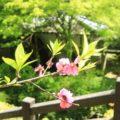 渓流公園 残りの桜と水車小屋