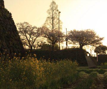 島原城 朝焼け 菜の花