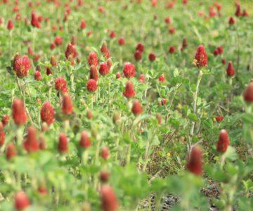 しまばら火張山花公園 ストロベリーキャンドル