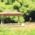 ひょうたん池公園 毛虫