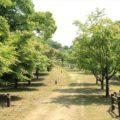 ひょうたん池公園 モミジ