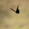 ひょうたん池公園 蝶