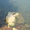 ひょうたん池公園 へび