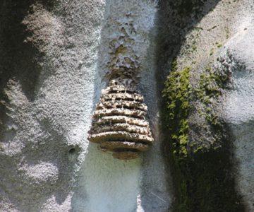 中尾川治山ダム 蜂の巣