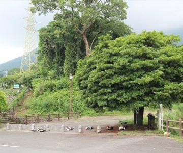 ひょうたん池公園 アヒル