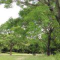 総合運動公園 多目的芝生広場
