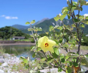 秩父が浦公園 黄色い花