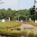 有明の森フラワー公園