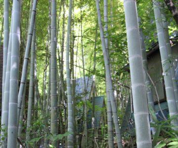 竹林と廃屋