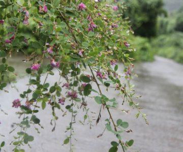 水滴が落ちる野花