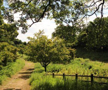 ひょうたん池公園 水と緑の広場
