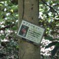 眉山の森遊歩道 ヤブツバキ