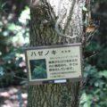 眉山の森遊歩道 ハセノキ