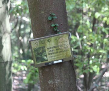 眉山の森遊歩道 クロキ
