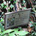 眉山の森遊歩道 クスノキ