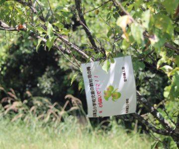 仁田団地第一公園
